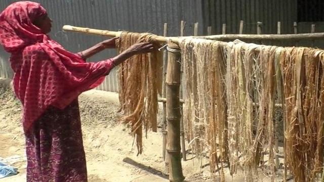 গোবিন্দগঞ্জে কলাগাছের আঁশ থেকে তৈরি হচ্ছে সুতাসহ উন্নত মানের ব্যবহার্য সামগ্রী